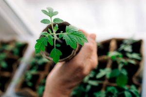 10 нужных вещей, чтобы вырастить рассаду наподоконнике