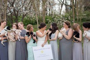 Щенячий букет: вместо цветов невеста раздала подружкам бездомных собачек