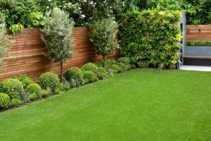 Выращивание газона на садовом участке